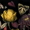 Yellow Rose with Moth