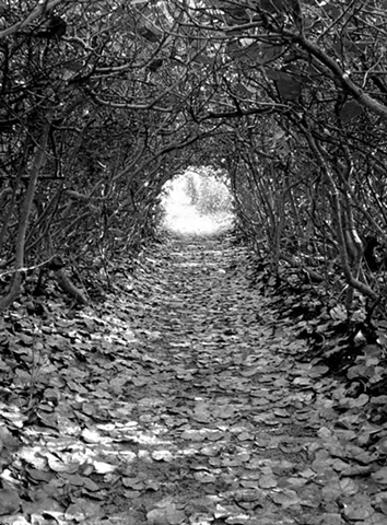 The Walking Path