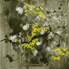 rocks and mossflowers in Doolin