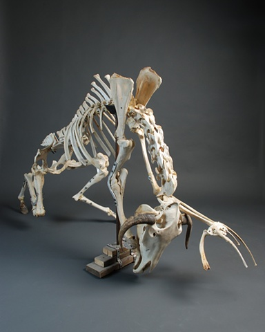 kevin vanek, Bones, Bone Art, Sculpture, Found object Sculpture