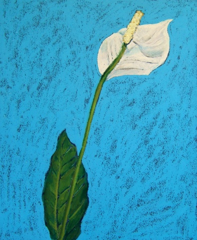 small artwork, pastel painting, tropical flower painting, hawaiian flower painting, artwork on paper