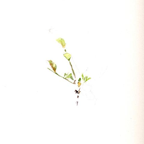 2009 7 7 Plant