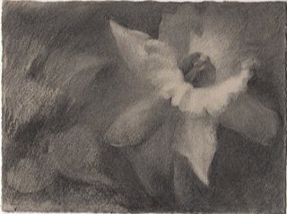 Delicate charcoal drawing on grey Somerset paper with deckled edges.  Study for a painting.