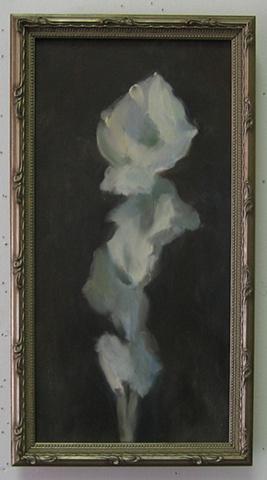 White Gladiolas