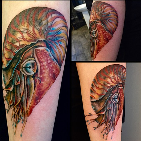 this is a tattoo of a nautilus done by amanda marie at evermore tattoo in los angeles california