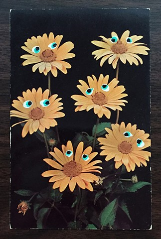 The Jolted Yellow Daisies