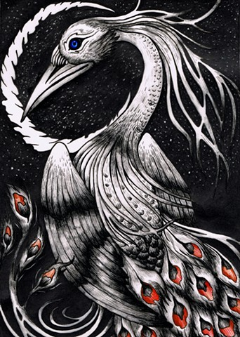 The Nocturnal Black Swan-Peacock