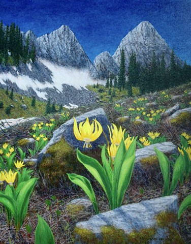 Rocky Mountain Flowers, Glacier Lilies, Wildflowers