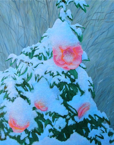 A painting of a late spring, heavy snowfall on a pink rose bush in a garden in Fernie, B.C.