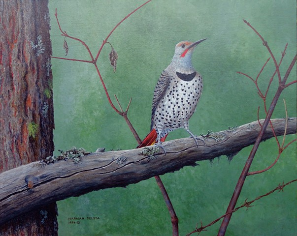 Painting, Northern Flicker, Fernie, BC, Elk Valley,  Rocky Mountains.