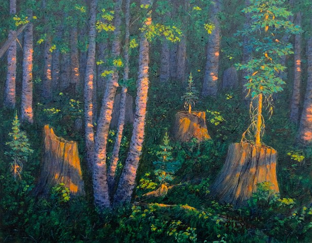 A painting of a nursery tree, an old stump which fosters the growth of a seedling tree in its decaying core, near Fernie, B.C.