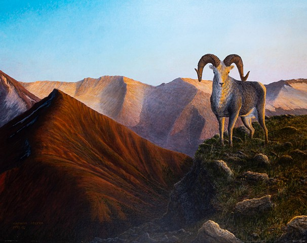 Stone Sheep, Eaglenest Range, Wildlife Painting, Cassiar District