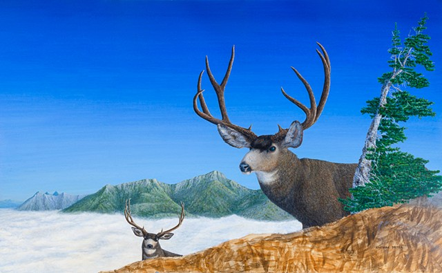 A painting of a large Mule Deer near Fernie, B.C. in the Canadian Rocky Mountains.