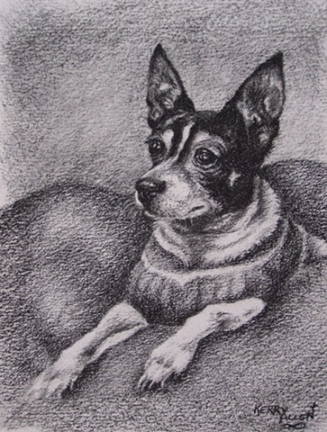 pet portrait, charcoal, drawing, rat terrier