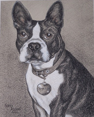 Boston Terrier, dog, animal, pet portrait