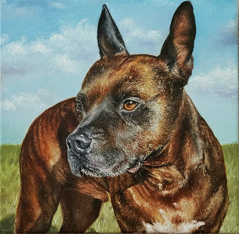 dog portrait, pet portrait, pit bull mix, rescue dog