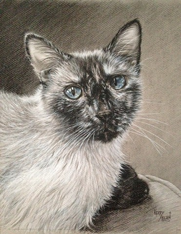 Siamese cat, charcoal drawing, cat portrait