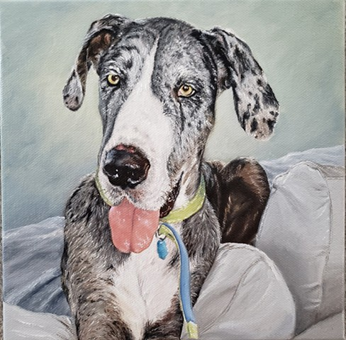 dog portrait, pet portrait, Great Dane, rescue dog, adopt