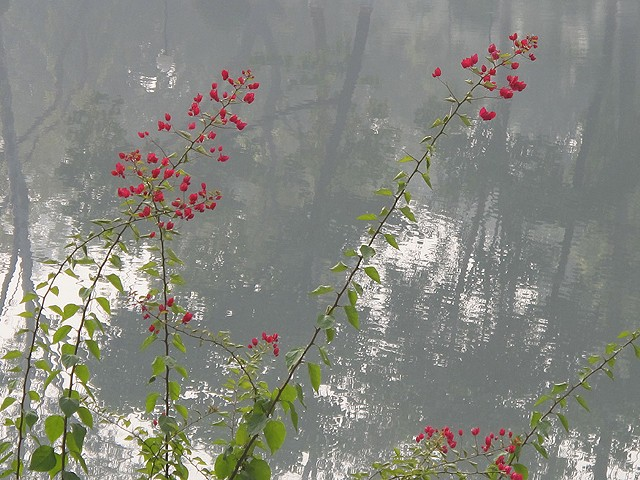Red Flower Pond