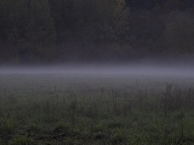 Field in Fog
