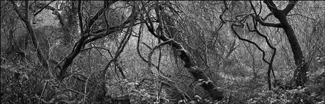 Deep Forest #1, 2009
