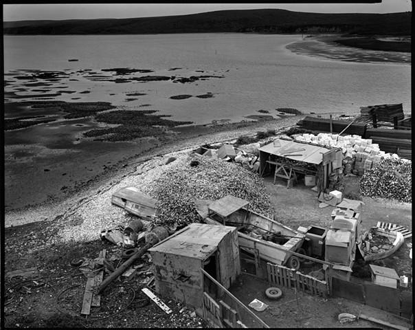 Johnson's Oyster Farm #5, 1985