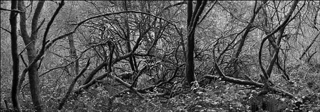 Deep Forest #2, 2009