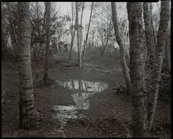 1986 #16