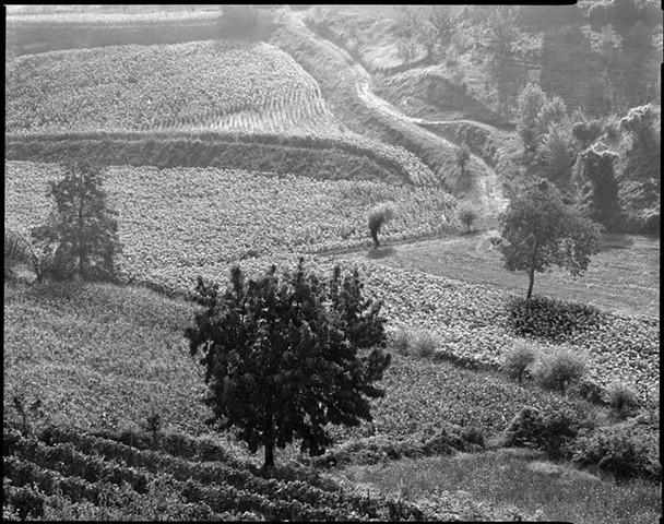 Landscape #136, 1987