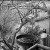 Umbrian scene #2, 2006