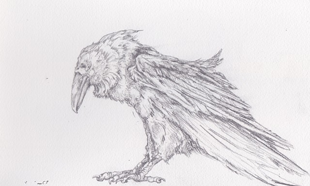 Pencil on Paper, Art, Fine Arts, Raven