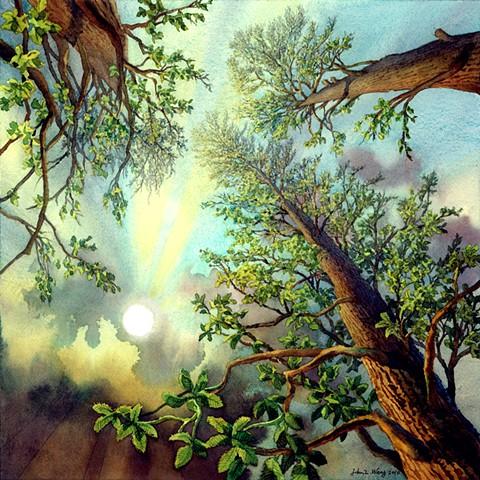 Seasonal tree watercolor by John Z. Wang jwthearchistudio.com
