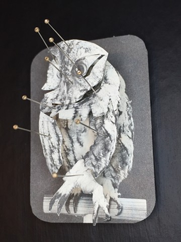 Martha Maxwell, women taxidermy, owl
