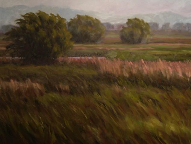 High Country Marsh