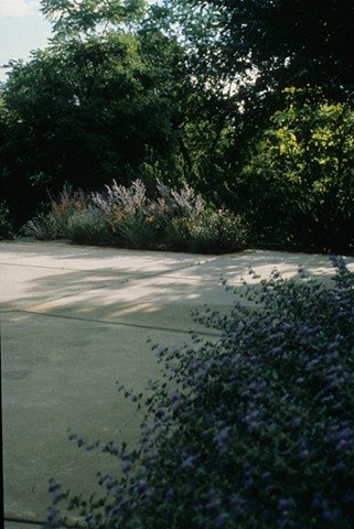 Boulder drought-resistant garden