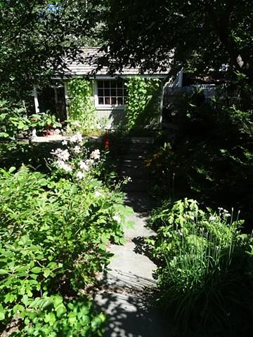 Garden path with pole beans
