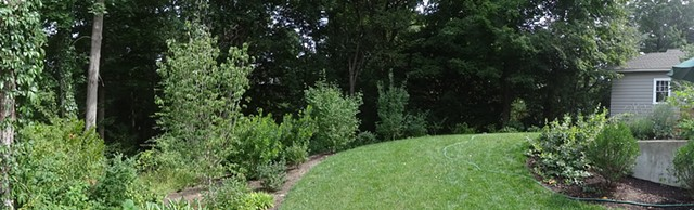 Newton, MA, residence after planting