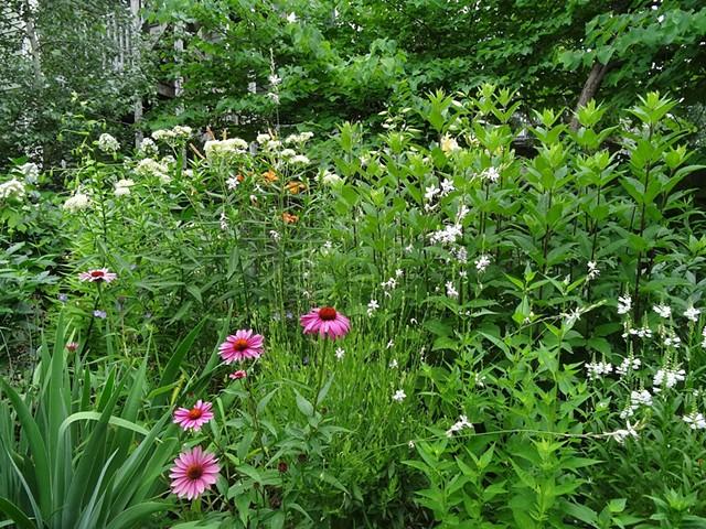 Perennial garden, Cambridge, MA