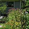 Late summer perennial garden