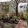 Cambridge garden entry during planting