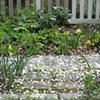 Petals on stone