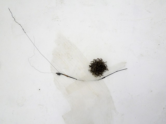 Dimitra Skandali, San Francisco Art Institute, Contemporary Art, seaweed, sea grass, San Francisco art, Pacific Ocean, Aegean Sea, Alyki, Paros, found objects
