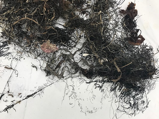 Dimitra Skandali, Site Specific Installation, Sound Installation, Contemporary Art, Aegean Sea, Paros, Alyki, Cyclades, Greek Art, Pacific Ocean, Atlantic Ocean, San Francisco Art, Los Angeles Art, Gray Contemporary, Houston Art, seaweed, sea grass, prote