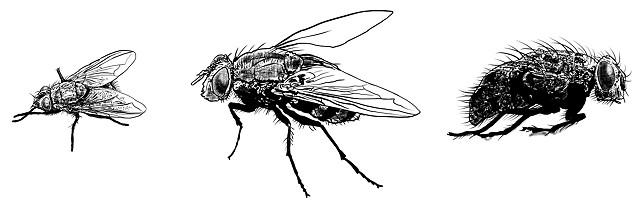 Flies Survivor Type Creepshow
