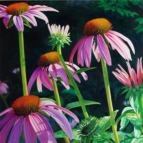 "Purple Coneflowers, 2009, Oil on panel, 22"" x 22"""