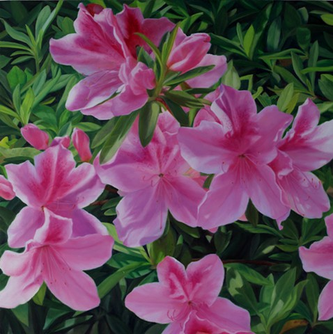 "Azaleas, 2011, Oil on panel, 22"" x 22"""