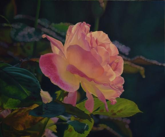 Fall Rose