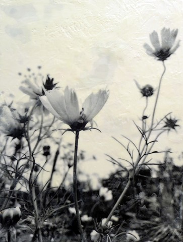 Photographic encaustic black and white flowers pollinator friendly plants