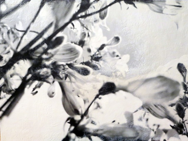 Contemporary flowers with photographic quality close up in black and white encaustic