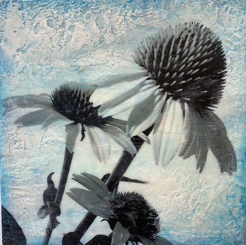 Encaustic contemporary photograph pollinator friendlys plants for sale